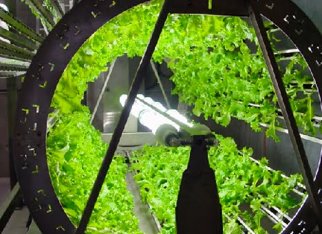 leds-for-plant-growth