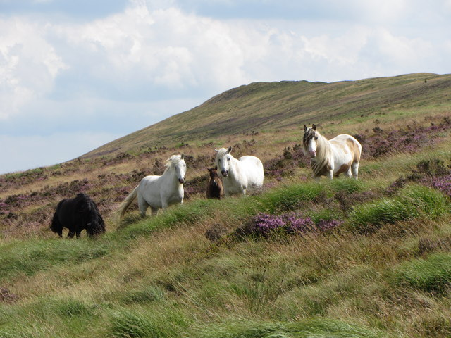 wild horses Gareth James