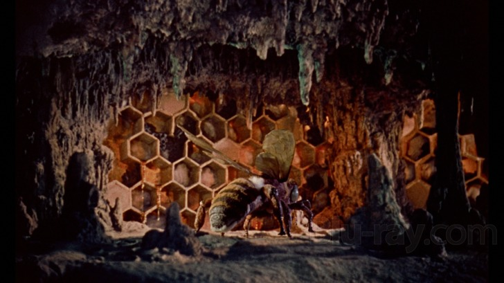 mysterious island bees